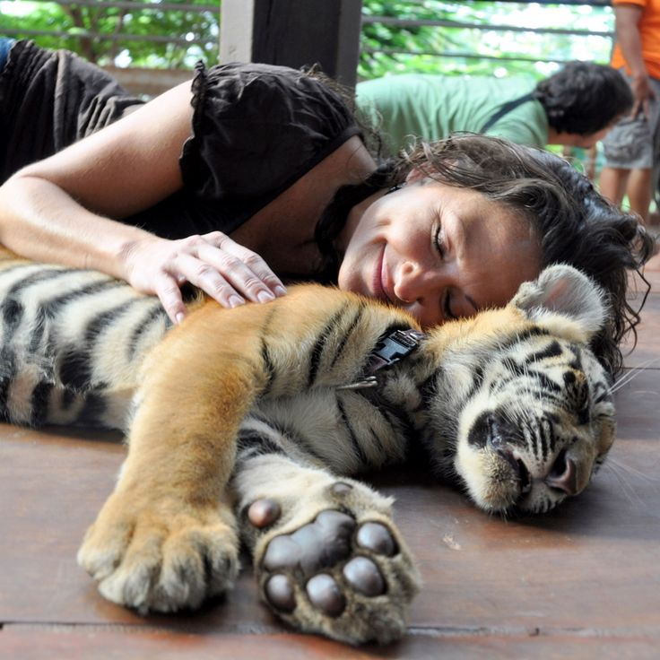 Tiger Temple, Bangkok.  #Travel #Bangkok #Asia #Thailand