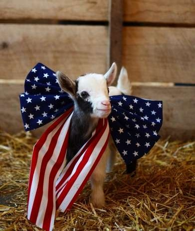fourth of july zoo brother mp3