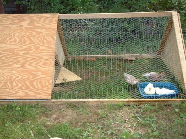 Pin by clay acres on clay acres homestead pinterest for How to build a duck pen house