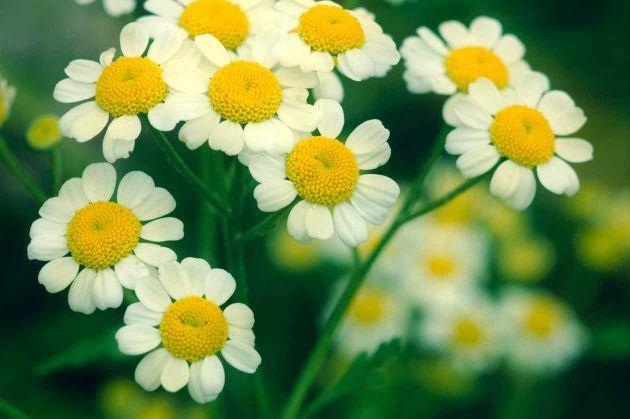 Tipos de hierbas medicinales 1 imag pinterest for Tipos de hierbas medicinales