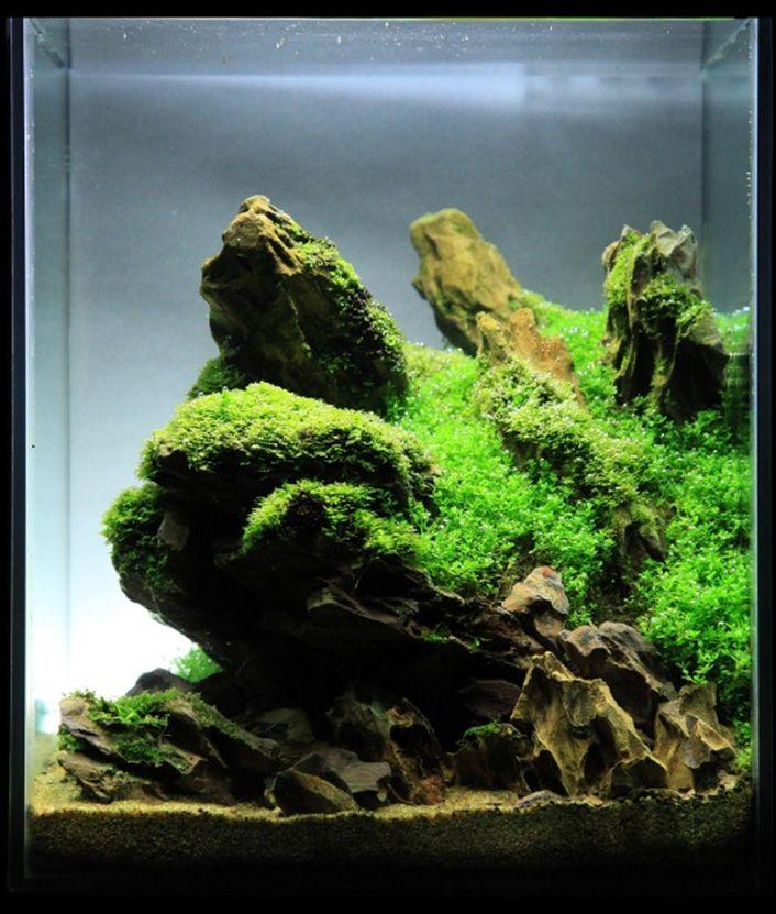 Inspiration-7 aquascaping Pinterest