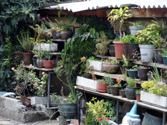 Urban backyard garden aventuras de abril happy house and garden