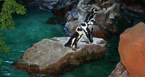 Childrens Aquarium At Fair Park Fair Park Dallas Tx