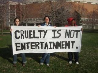 USDA Ban exotic animals in the circus: Stop abuse of elephants Bull Hook, chains, Tigers, Lions, Zebras Whips.
