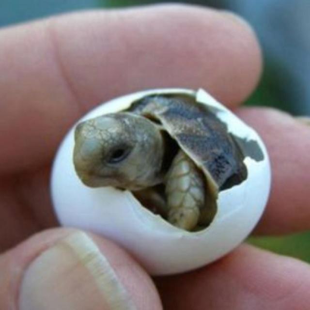 Baby Pet Turtles : Awwwee!!!! Baby Turtle