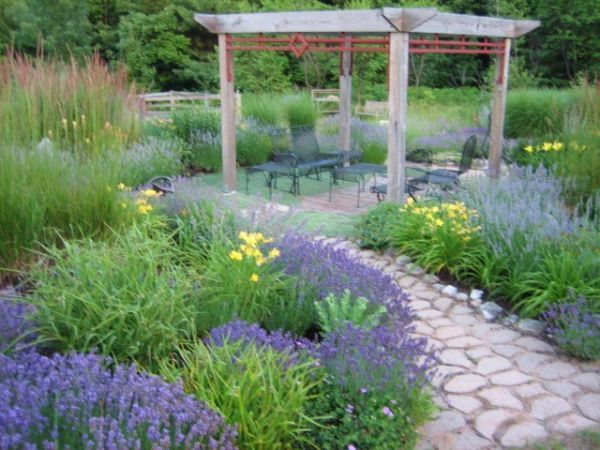 Landscaping With Lavender Plants : Use of lavender in landscaping gardening