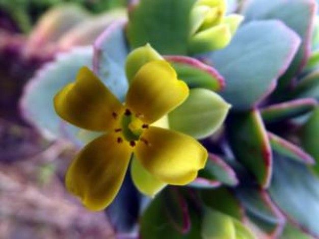 Flores ex ticas flores pinterest - Flores tropicales fotos ...