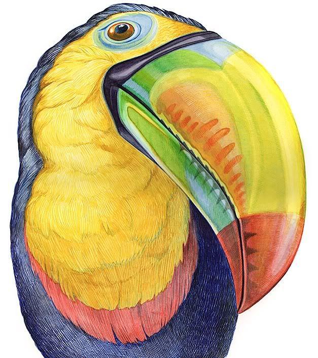 Toucan Bird Drawing toucan   I N S P I R A...