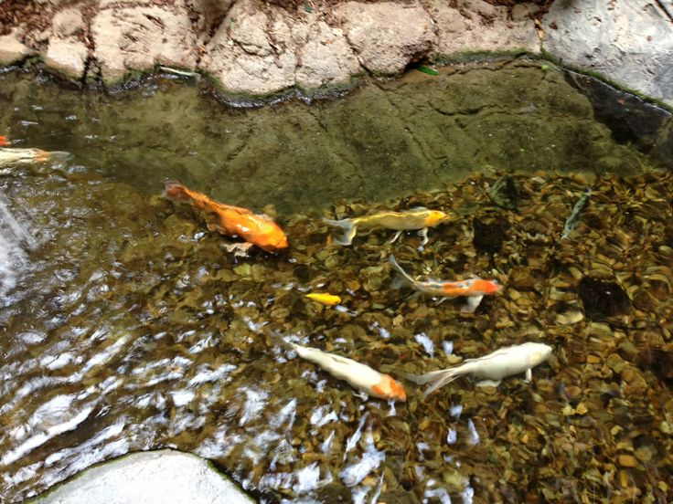 301 moved permanently for Beautiful koi ponds