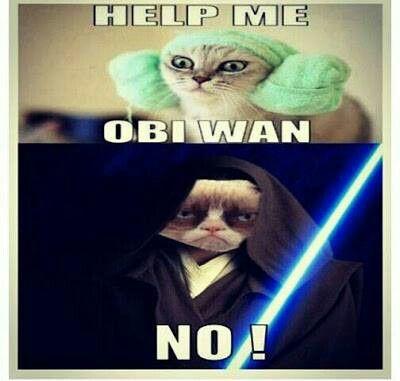star wars grumpy cat - photo #25