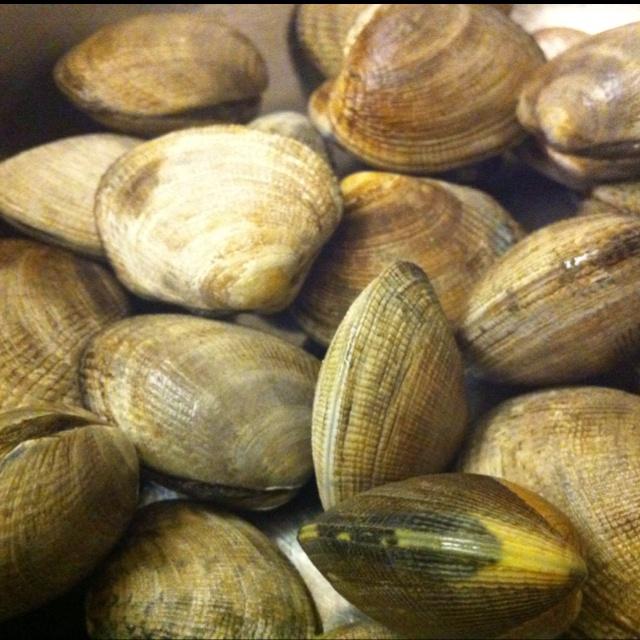 Manila clams. | Manila | Pinterest