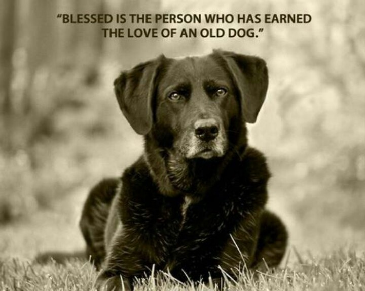 Dog loyalty quotes - photo#13