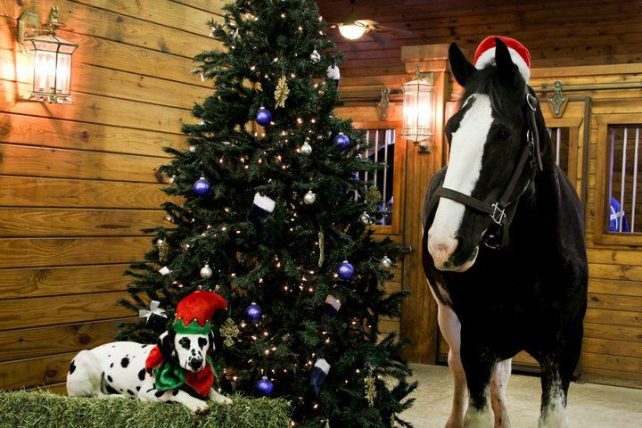 clydesdale xmas | Christmas card ideas 2012 | Pinterest: pinterest.com/pin/360850988864435108
