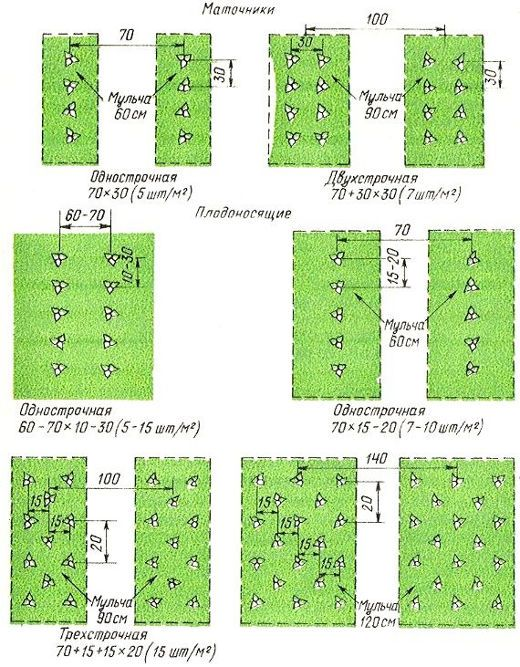 Схема посадки клубники гигантелла макси