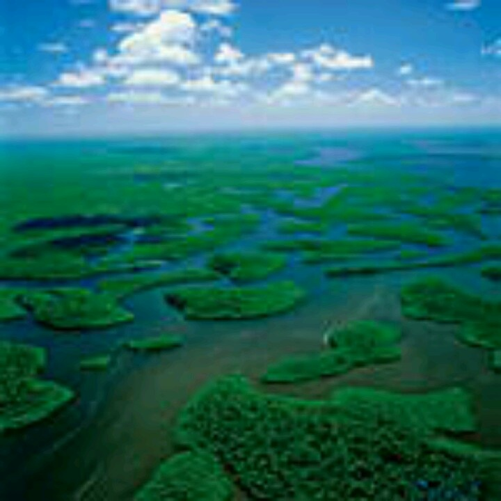 """everglades essay paper Everglades essay submitted by: cheyennesmom on november 24,  unesco paper sabrina andrews 11/24/2012 bio/100 the everglades is a national park located in america this national park is in florida and it is an ecosystem that's sizes is over """"two million acres"""" (xxx) the everglades is surrounded by human development."""