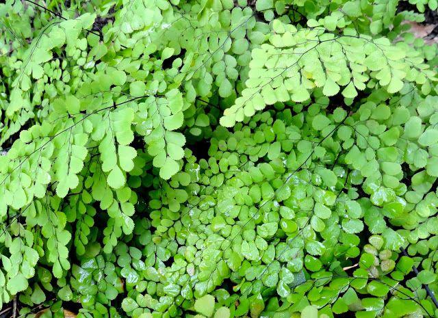 Pin by christine licker on garden schemes pinterest - Vegetable garden zone 5a ...