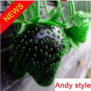 Free shipping 50pcs black Strawberry seed fruit Potted Garden ...