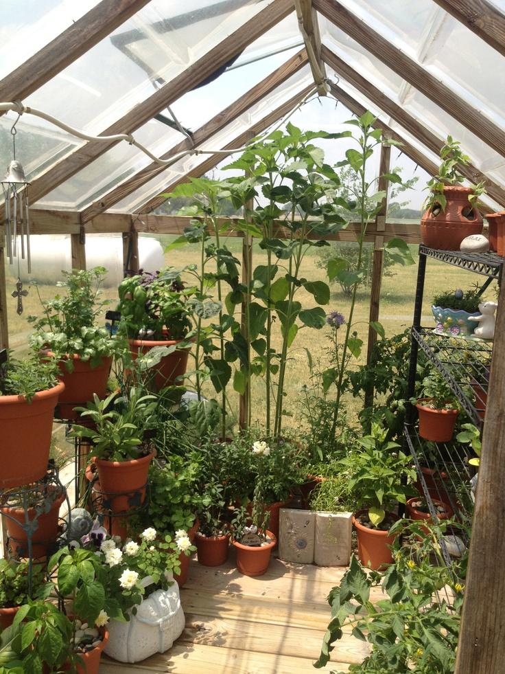 may 2012 backyard greenhouse pinterest
