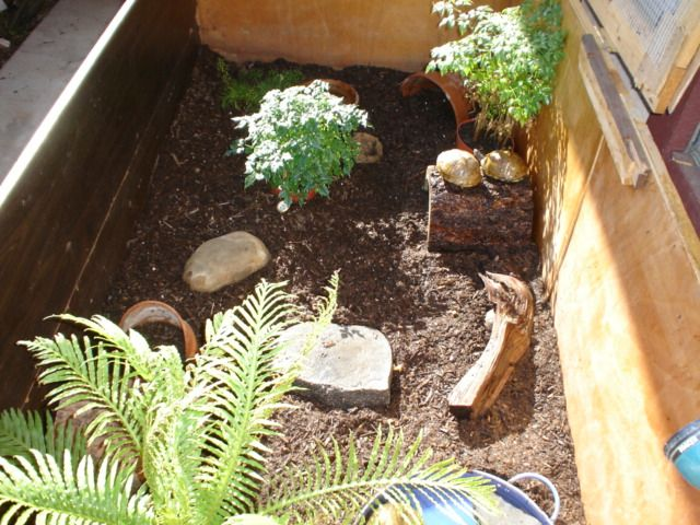 Beautiful habitat for a classroom pet box turtle. Turtle Pinterest