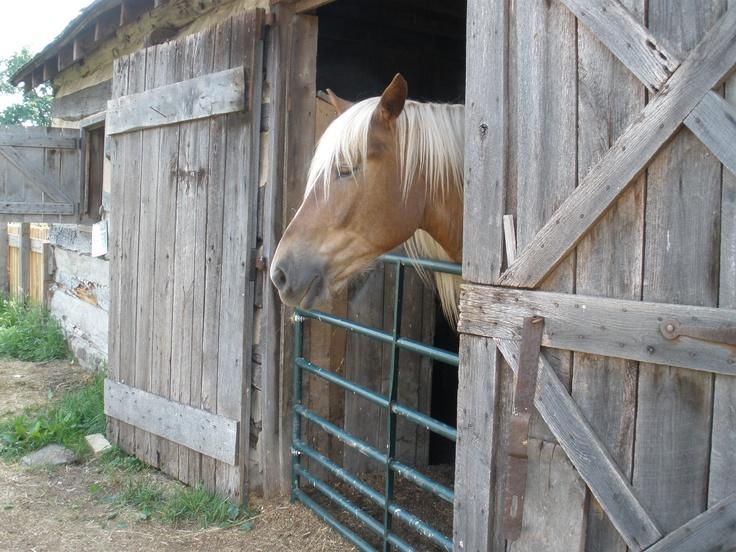 Horse in Bedford Village