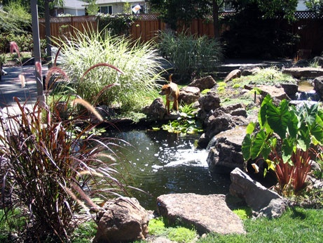 Plants Around Pond Gardening Patio Idea 39 S Pinterest