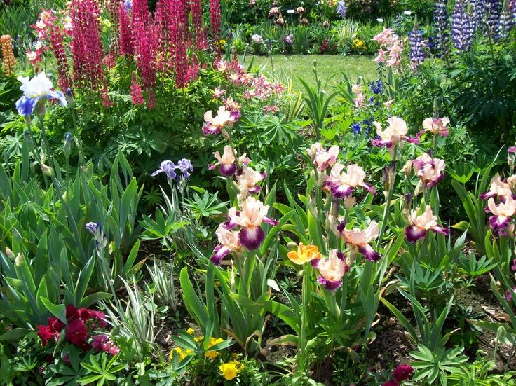 Schreiner 39 S Iris Garden All Iris Pinterest