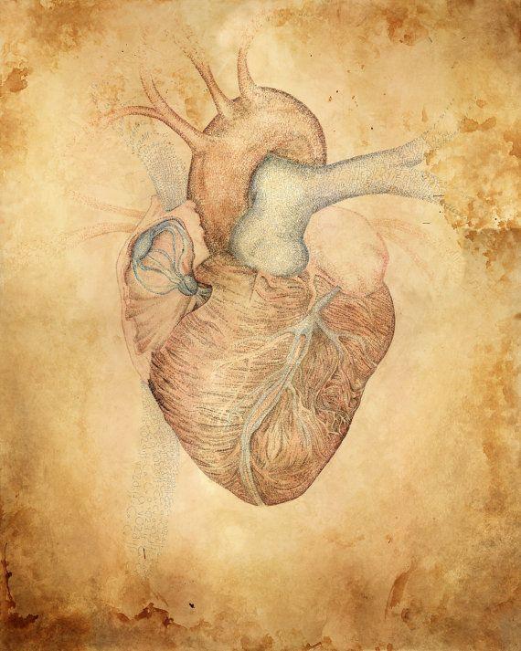 Essay on human heart