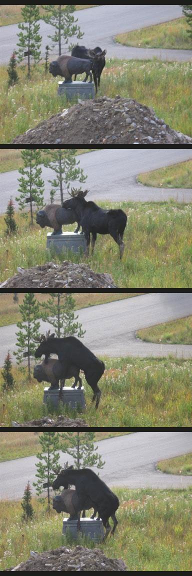 Moose Humps Monument