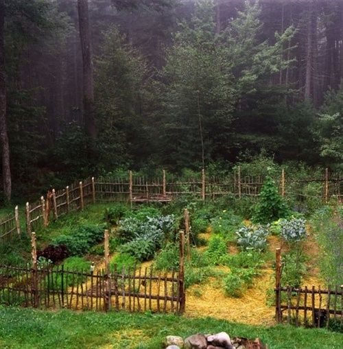 Rustic Fenced Garden Cabin In The Woods Pinterest