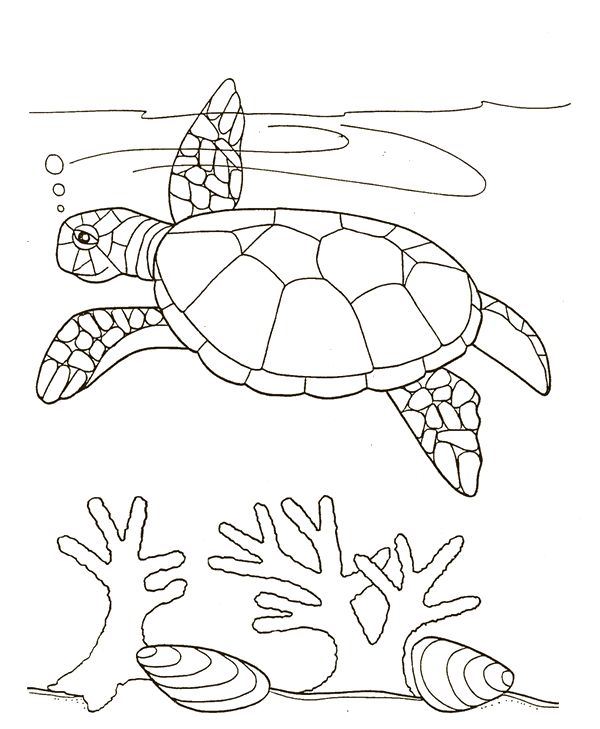 coloring pages of seaweed - photo#24