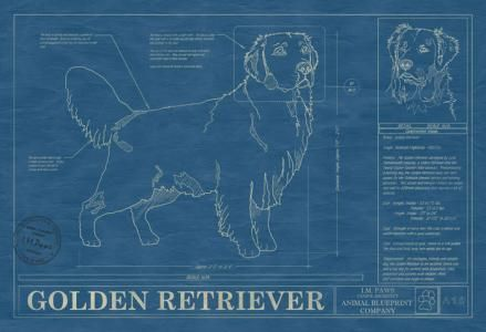 Animal Blueprint Company: Golden Retriever Dog Print