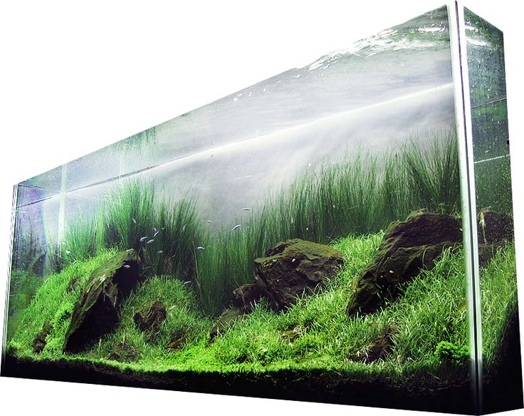 tall thin planted tank aquascapes pinterest