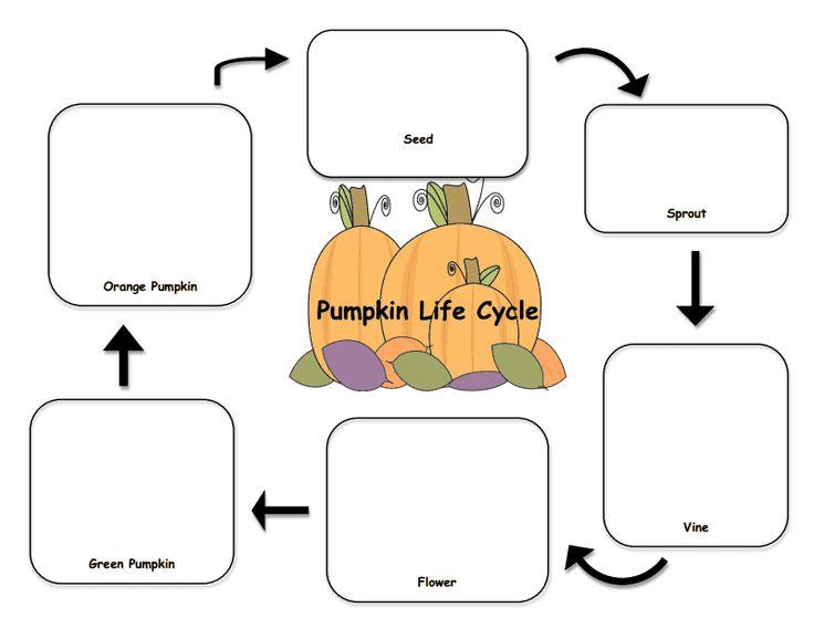 Pumpkin Life Cycle Worksheets Proga Info