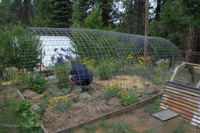 Diy greenhouse from hog panels garden ideas pinterest for Diy hoop greenhouse