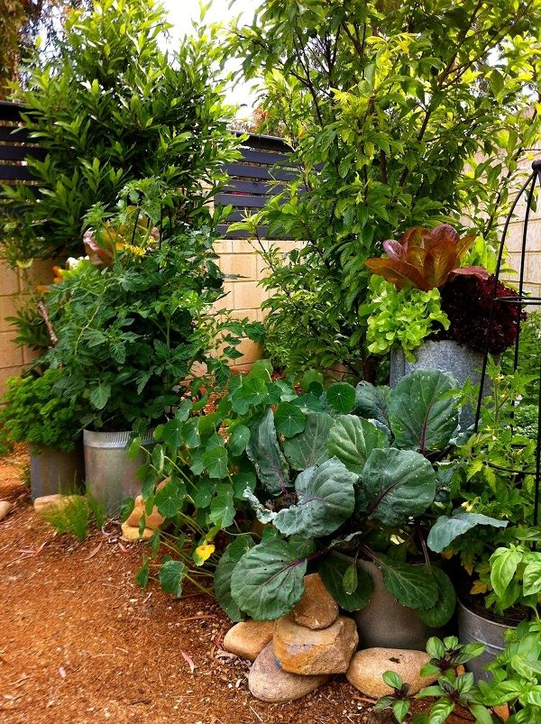 herb garden design ideas photograph beautiful herb garden