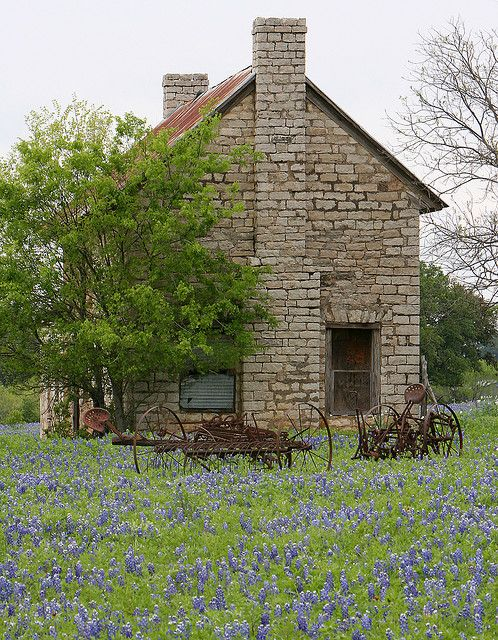bluebonnets, stone farm house, and antique farm tools