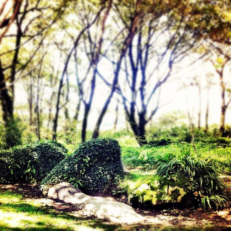Lost Garden of Heligan #cornwall #garden #sculpture