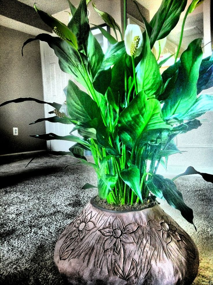 Pin by abby abbott on for the home pinterest for Indoor plants for better air quality