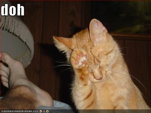 Facepalm Level: Cat | Amusing Stuff | Pinterest