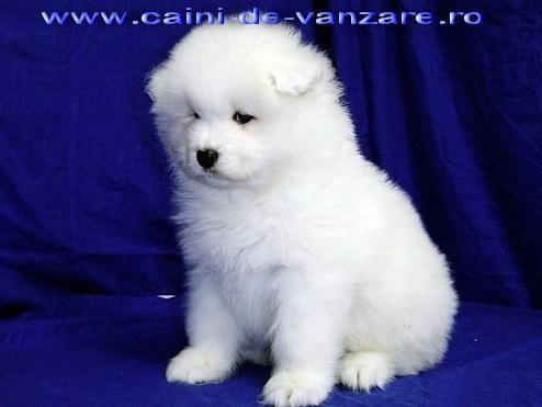 Puppy so cute dogs pinterest
