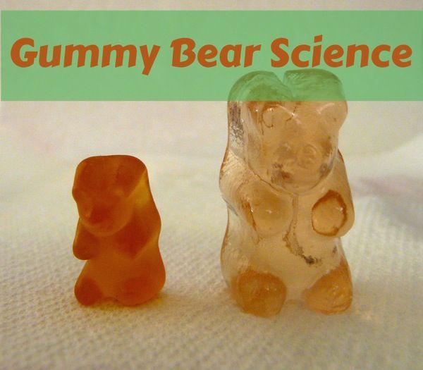 Gummy Bear Experiment Osmosis Teacherspayteachers Com | LZK Gallery
