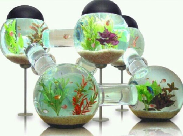 Betta aquarium self cleaning joy studio design gallery for How to clean a betta fish tank