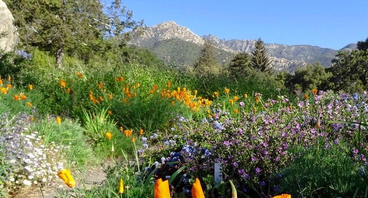 santa barbara botanic garden heart 39 s home pinterest