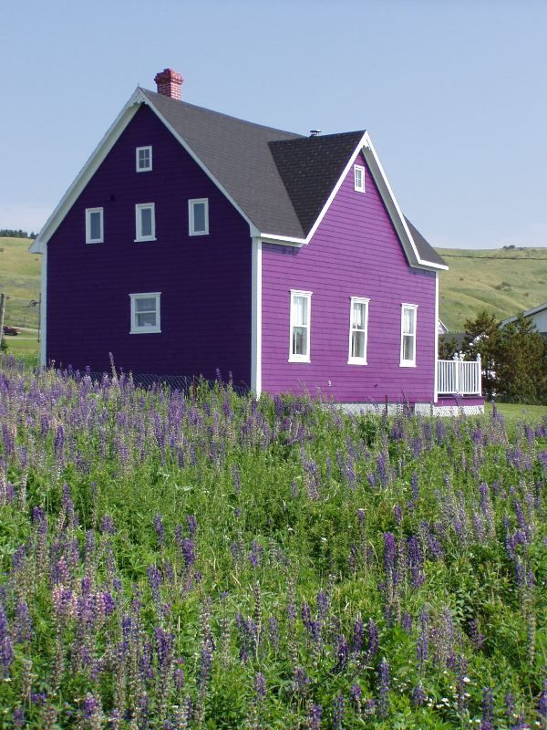 Lady with the purple house.