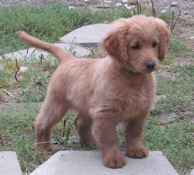 cute dog breeds that don't shed | Cute Furry Friends | Pinterest