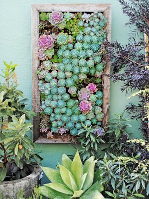 How to plant succulents in a vertical tray -- very cool!