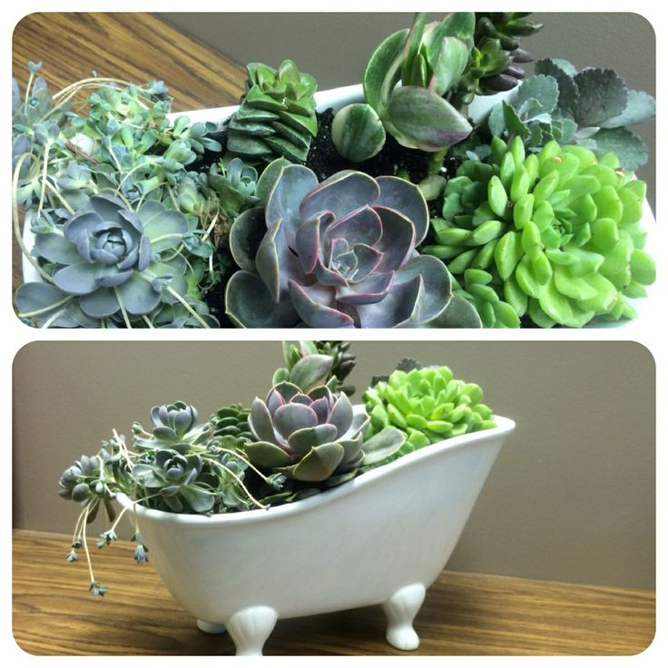 succulents great office plants flowers gardens