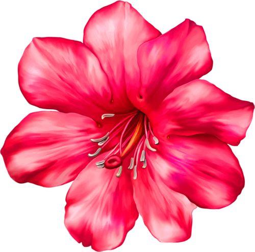 Фото 1 цветок на белом фоне