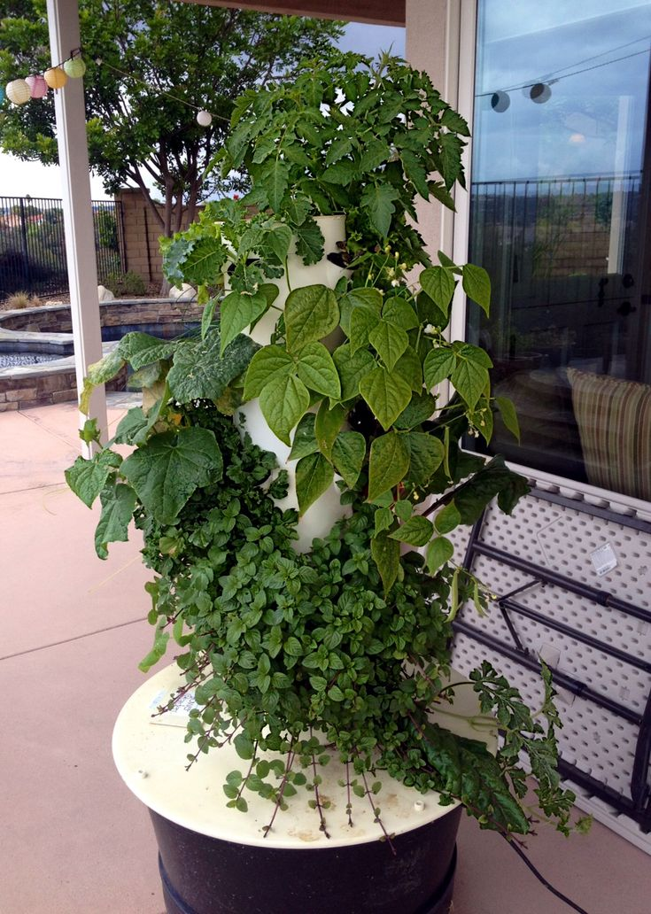 Aeroponic Growing Towers Images