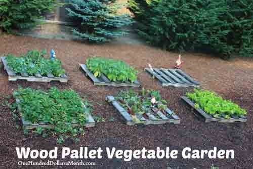Self Sufficient Backyard Ideas : Wood Pallet Vegetable Gardening  Self Sufficiency  Pinterest